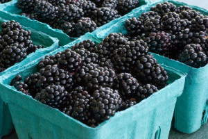 Blackberries_3821343779